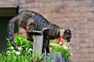 Katze im Angriff