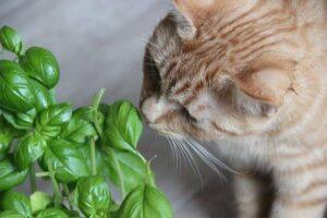 Katze mit Grünpflanze